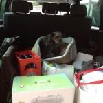 Das Auto ist geladen, und der Hund will auch mit