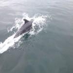 Was für dicke Delphine!