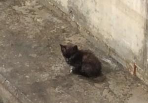 Die arme schwarze Katze