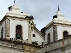 Mehrere Storchennester, diesmal auf einer Kirche