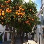 Orangenbäume in der Altstadt von Estepona
