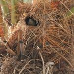 Die Nester
