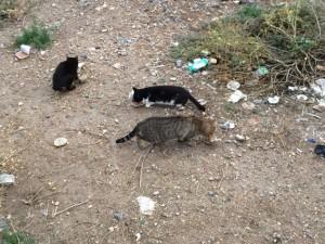 Wie die wilden Katzen sich auf unser Futter stürzen...