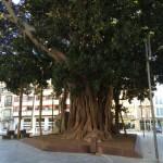 ...und das ist der Baum