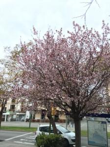 Hier blühen erst die Mandelbäume