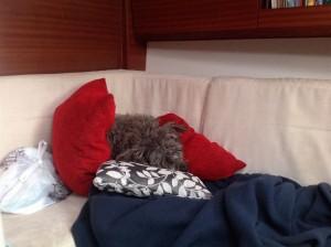 Nico in den Kissen: Nichts sehen, nichts hören