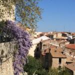 Der Knöterich blüht an der alten Festungsmauer