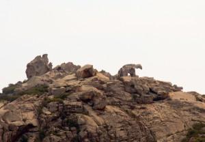 Ein Fels wie ein Bär, kurz vor Palau