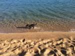 Morgendliches Bad für den Hund