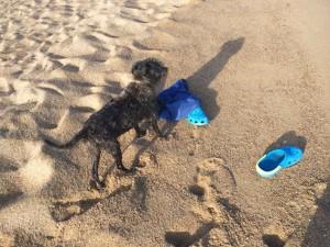 Die Schuhe liegen am Strand, wo ist Volker, fragt Nico sich?