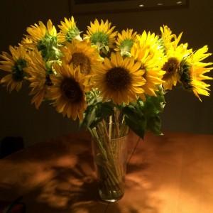 Sonnenblumen vom Darmstädter Samstagsmarkt