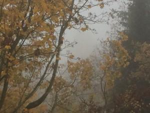 Dichter Nebel hält sich im Akaziengarten