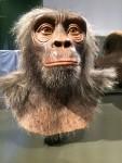Noch Affe oder schon Mensch?