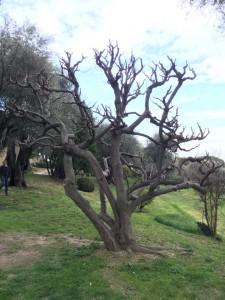 Kennt jemand diesen Baum?