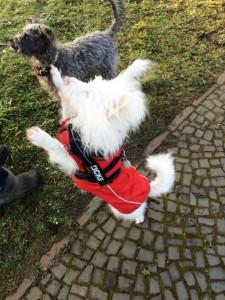 Nico mit Hundefreundin im Park
