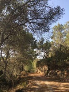 Im Wald riecht es nach Pinien, Thymian und Rosmarin