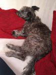 Nico ist auch hundemüde
