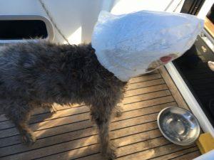 Nico leckt die Krümel aus der Brötchentüte