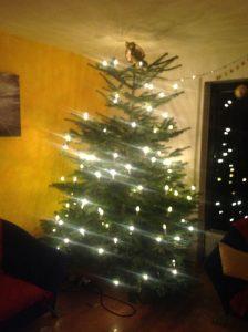 Alle Jahre wieder: ein Traum von Weihnachtsbaum