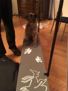 Auch Nico übt schon den Gang über die Planke
