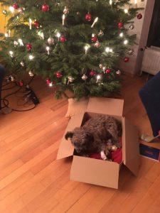 Noch hat Nico es gemütlich vor dem Weihnachtsbaum